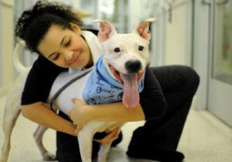 holiday-dog-adoption