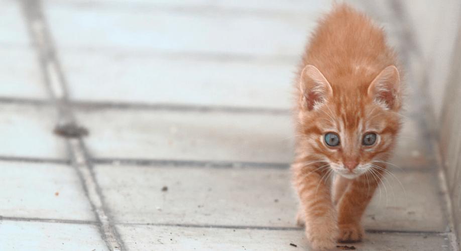 meu-gato-fugiu-onde-encontro-ele