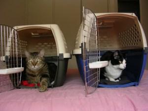 dog walker pode transportar gato e cachorro no onibus em sp