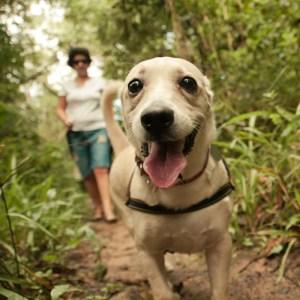 Fazer trilhas com seu cachorro pode ser uma diversão e um exercício alternativos!