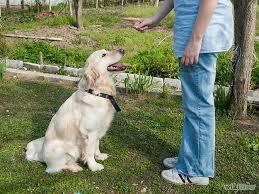 Ter um cachorro comportado é mais simples do que você imagina!