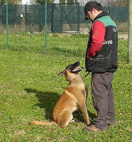 dog walker ensina cachorro agitado