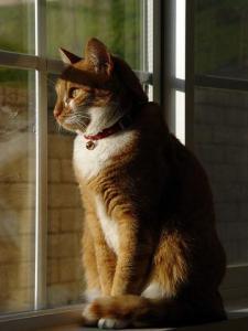 """Muitos gatos são tidos como """"anti sociais"""", mas eles só estão muito muito muito assustados e estressados por terem que sair de casa"""