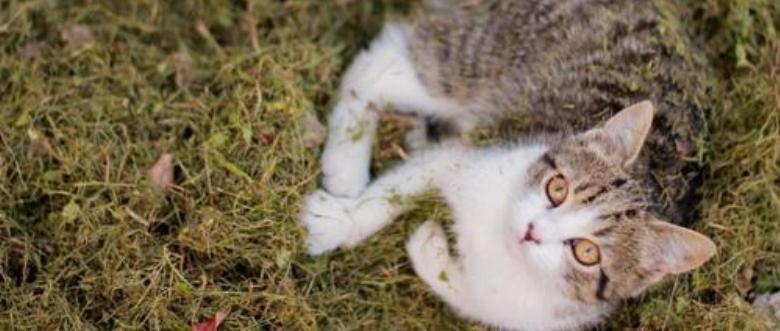 pet-sitter-profissional-cuida-de-gato