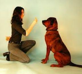 ensinar o seu cachorro a sentar 7