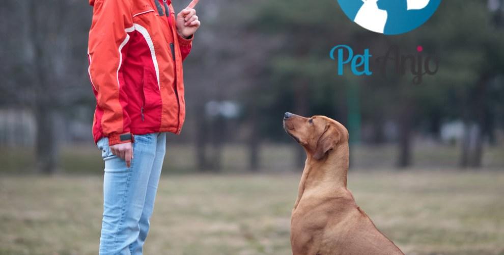 ensinar o seu cachorro a sentar capa