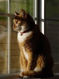 Deixar seu gato com o menino da casa ao lado, nunca é a melhor opção!