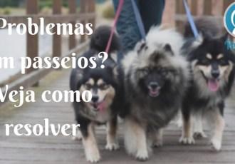 Resolvendo problemas passeios cachorro