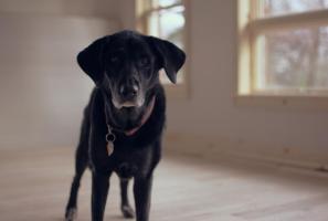 pet-sitter-cuida-de-cachorro-evitando-estresse-por-ficar-sozinho-em-casa