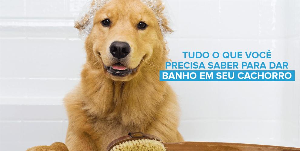 Tudo sobre banho em cachorro - Pet Anjo