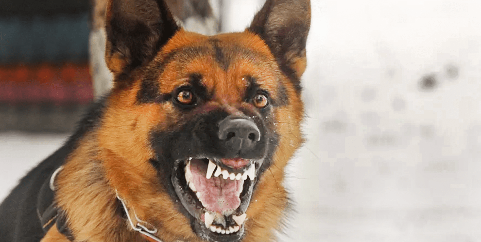 card-cachorro-brabo