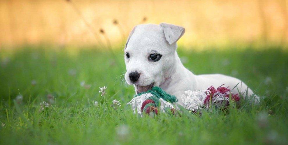 ac74016808 Adotei um cachorro