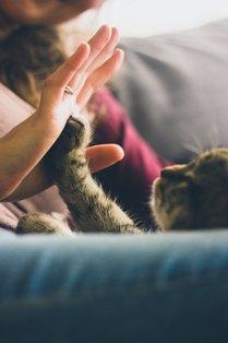 pet-sitter-cuidando-de-gato