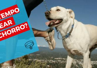 dog walker quanto tempo passear com cao