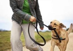 dog walker passeia com cao agitado