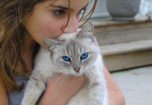 cat sitter como escolher