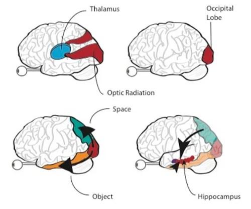 Memories, Photographs, and the Human Brain brain