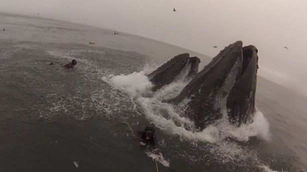 Divers Capture What Its Like to Almost Get Eaten by a Massive Whale mouthful