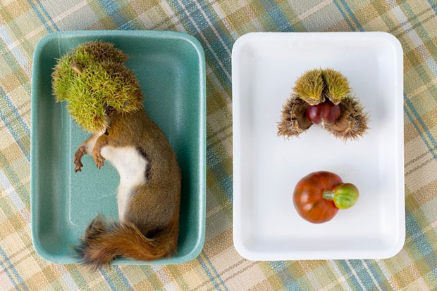 Peaceful Still Life Photographs Combine Kitchenware and Roadkill roadkill 5