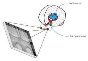 Memories, Photographs, and the Human Brain thali