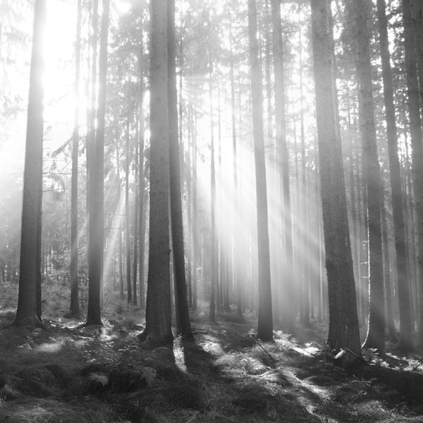 The Forest Photography of Jürgen Heckel 1f41abd843a949a8fb96ee581e87c383