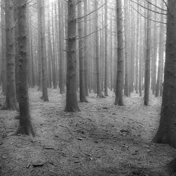 The Forest Photography of Jürgen Heckel 25b13f8a5fcc2aacfa62d7bf6df9d101