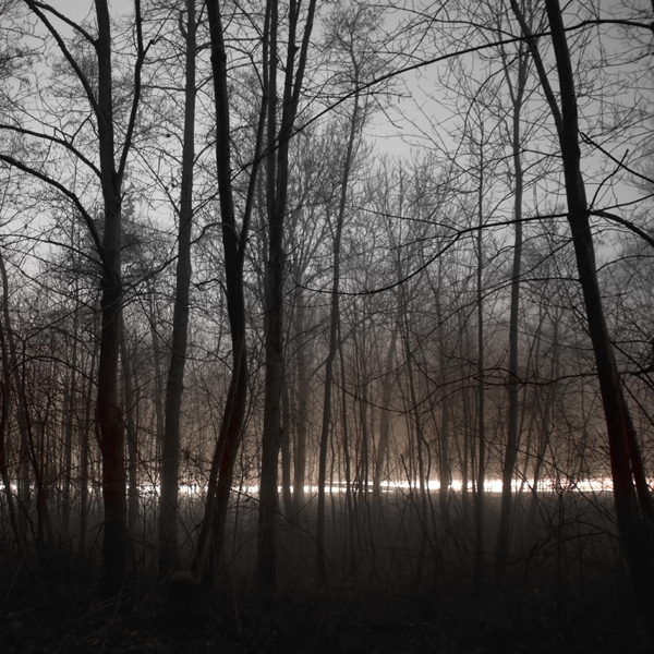 The Forest Photography of Jürgen Heckel 8a743b8f67d348f45d92531c02c561e2