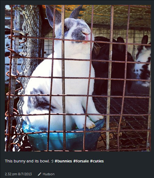 Instagram Under Fire for Hosting Photos for Live Animal Sellers ScreenHunter 105 Aug. 07 16.04