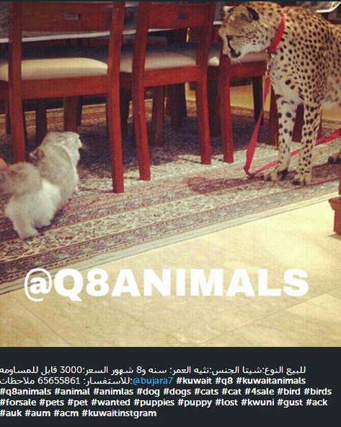 Instagram Under Fire for Hosting Photos for Live Animal Sellers ScreenHunter 107 Aug. 07 16.07