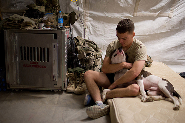 Interview with Andrew Nelles, Former Chicago Sun Times Photographer Tactical Explosive Detection Dog handler SPC. Alexander Reimer of the 4th Brigade Combat Team 82nd Airborne Division and his dog Howard prepare for bed at COP Sangsar in Zharay District Kandahar P