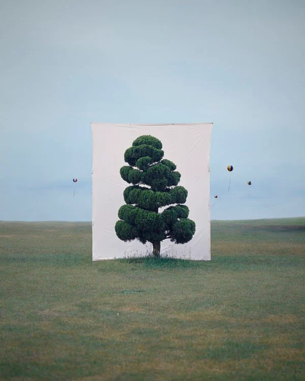 Photographs of Outdoor Trees Framed by Giant White Canvases Tree 2 2006