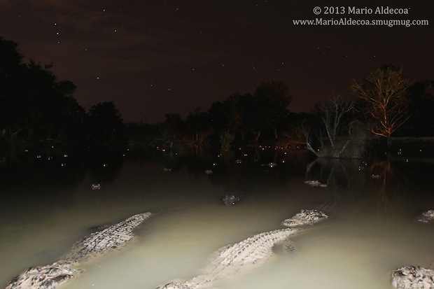 Photog Has DSLR Snatched by Alligator, Only to Have it Returned 8 Months Later aligatorcam2