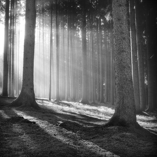 The Forest Photography of Jürgen Heckel cd56e91a0ba73468a5d1cc93625adf29