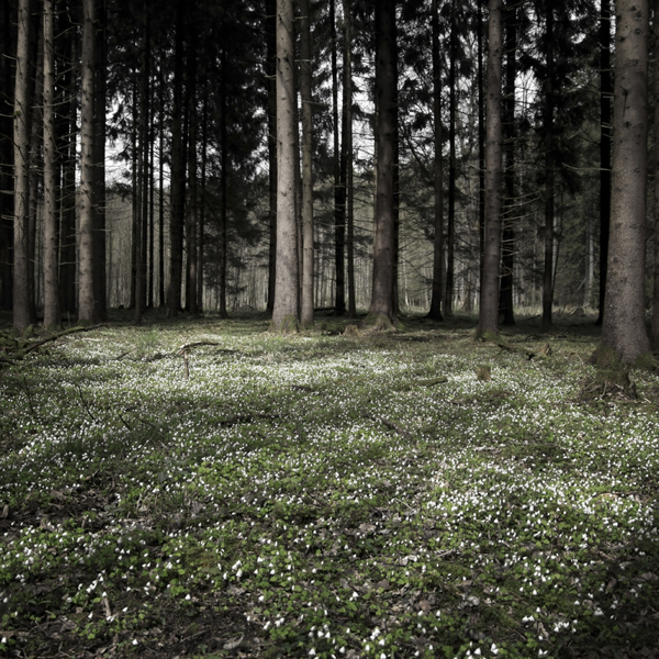 The Forest Photography of Jürgen Heckel fc06bb3f565e220e864573cb3eac5916