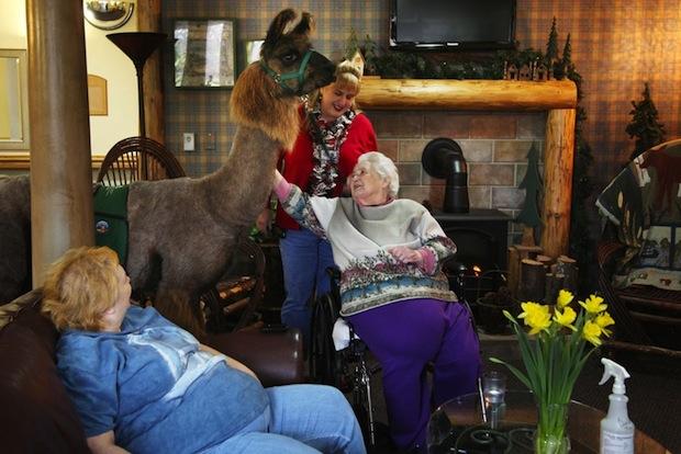 Heartwarming Photos of Therapy Llamas Interacting with Patients at a Hospital llamalove2