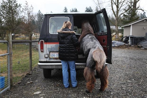 Heartwarming Photos of Therapy Llamas Interacting with Patients at a Hospital llamalove7