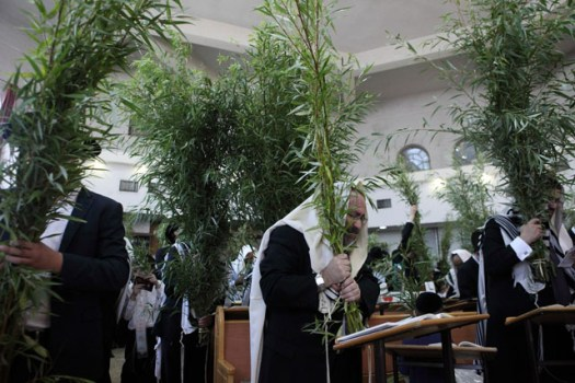 Ultra-Orthodox Jews pray while holding willow tree branches.