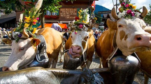 Decked-out cows on parade in Gstaad, Switzerland.