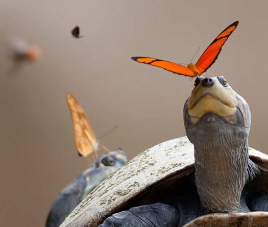 turtletear2