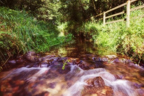 forest-stream-ballyhoura-limerick-ireland