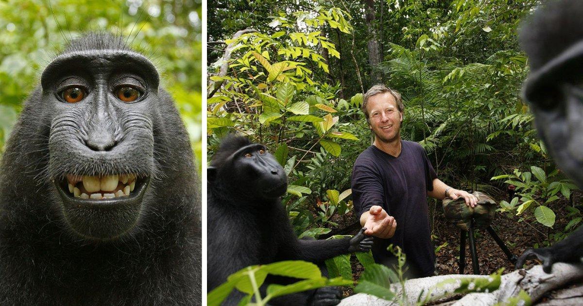 Photographer Wins Monkey Selfie Copyright Case, Court Slams PETA