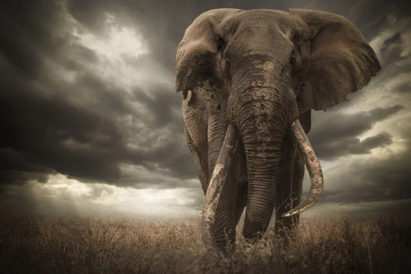 wildlife photo contest winner