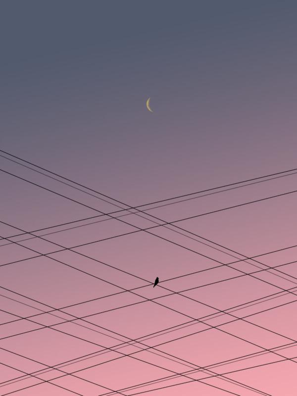BirdOVerhead Wires1200