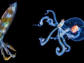 Il subacqueo cattura bellissime foto subacquee notturne e video Slo-Mo
