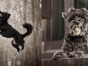 La splendida serie di foto presenta animali domestici di colore scuro spesso ignorati