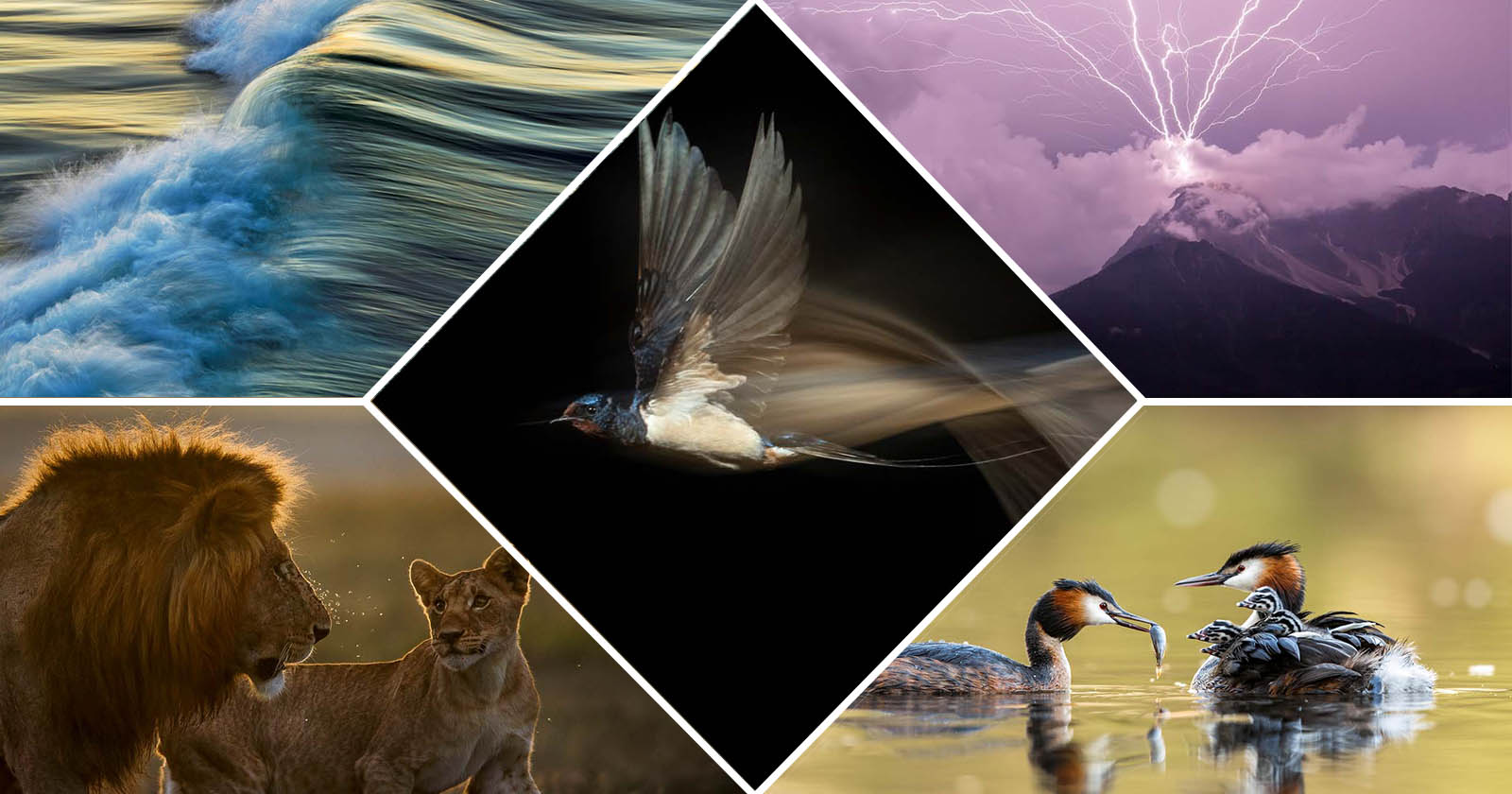 I vincitori del GDT Nature Photographer of the Year 2021