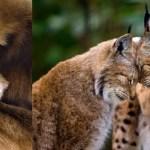 Foto di amore nel regno animale