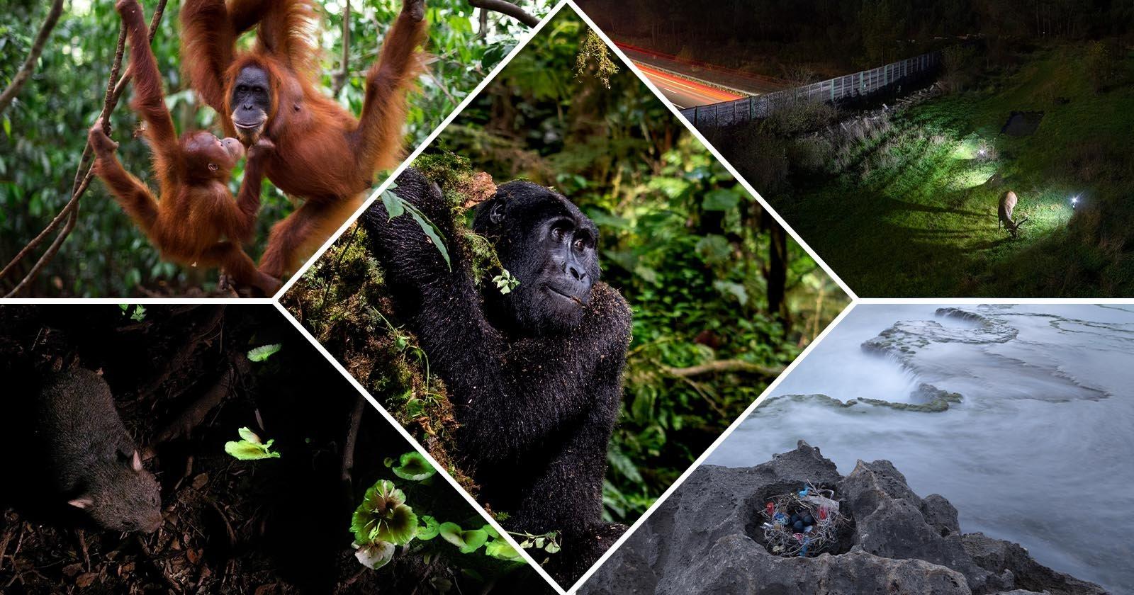 I vincitori dei PA2F Environmental Photography Awards 2021
