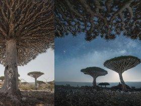"""Splendide foto di Socotra, il """"posto più alieno della Terra"""""""