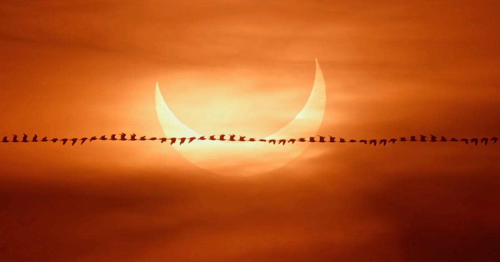 """Fotografo cattura """"la scia degli uccelli"""" contro un'eclissi solare"""